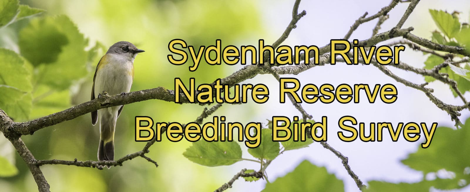 Sydenham River Nature Reserve Breeding Bird Survey
