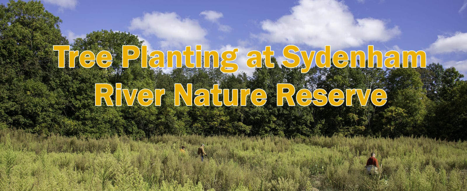Tree Planting at Sydenham River Nature Reserve